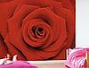 """Фотообои """"Красная роза"""""""