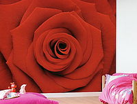 "Фотообои ""Красная роза"", фото 1"