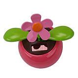 Сонячна квітка, фото 2