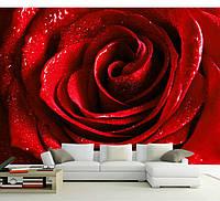 """Фотообои """"3d алая роза"""", текстура песок, штукатурка"""