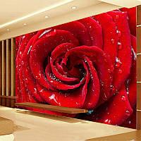 """Фотообои """"3d красная роза"""", текстура песок, штукатурка"""