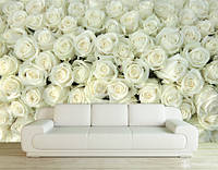 "Фотообои ""Миллион белых роз"", текстура песок, штукатурка"