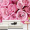 """Фотообои """"Розовые нежные розы"""""""