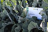 Семена цветной капусты АВИЗО F1, 2500 семян, фото 5