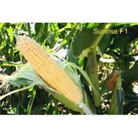 Семена кукурузы Санрайз 5000 с.  F1 Аgri Saaten