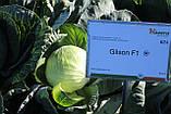 Семена капусты Гилсон F1 / Gilson F1, 2500 семян, фото 3