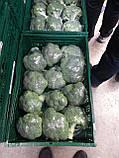 Насіння броколі КОРОС F1, 1000 насіння New!, фото 4