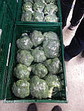 Семена брокколи КОРОС F1, 2500 семян New!, фото 4