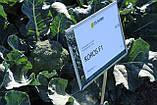 Семена брокколи КОРОС F1, 2500 семян New!, фото 6