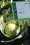 Насіння капусти СІР F1, 1000 насіння (Elisem), фото 4