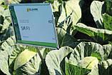 Насіння капусти СІР F1, 1000 насіння (Elisem), фото 5