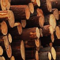 Стволы дерево клен, ясень, тополь, акация