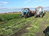 Семена Морковь Каскад F1 / Cascade F1, (1, 6-1, 8 мм), 1 млн. семян, фото 5