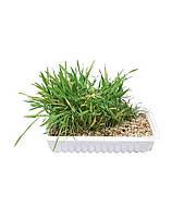 TRIXIE Трава для кота в контейнере 130 g
