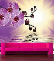 "Фотообои ""Орхидеи над водой"""