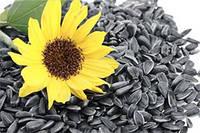 Семена подсолнечника Рими, Стандарт