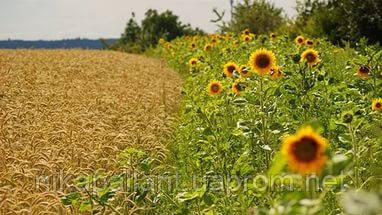 Какую органическую продукцию Украина экспортирует в ЕС