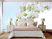 """Фотообои """"С белой орхидеей"""", текстура песок, штукатурка"""