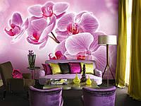 """Фотообои """"Ветка нежной орхидеи"""""""