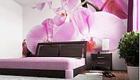 """Фотообои """"Малиновые орхидеи"""", текстура песок, штукатурка"""