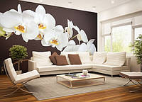 "Фотообои ""Веточка белой орхидеи"", текстура песок, штукатурка"