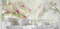 """Фотообои """"Красивые орхидеи"""", текстура песок, штукатурка"""