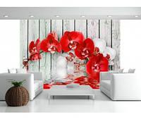 """Фотообои """"Красная орхидея"""", текстура песок, штукатурка"""