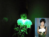 Краска ТАТ 33 для цветов светящаяся в темноте оптом и в розницу свечение 8 - 12 часов
