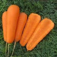 Боливар F1 семена моркови Шантане 1,4 - 1,6 мм среднеспелой Clause 100 000 семян
