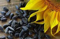 Семена подсолнечника Atlas (Атлас)