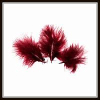 Перья натуральные бордовые (10 штук)