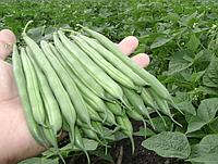 Семена фасоль спаржевая зелёная  20г.