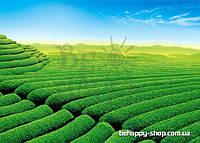 """Фотообои: """"Зелёное поле"""""""