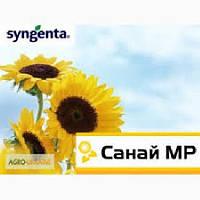 Подсолнечник Syngenta Санай МР ( под ЕвроЛайтинг)