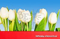 "Фотообои: ""Белые тюльпаны"""