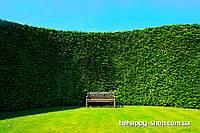 """Фотообои: """"Зелёный сад"""""""