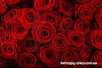 """Фотообои: """"Красные розы"""""""