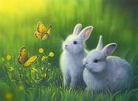Набор алмазной мозаики Кролики в траве