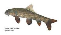 рыба доктор киев