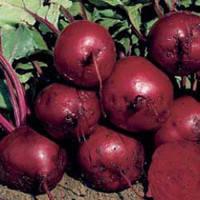 Семена свеклы Ларка PR 100 000 сем.Рийк цваан Larka RZ F1