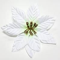 Пуансетия новогодняя белая