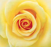 "Бумажные фотообои ""Желтая роза"" 210х196 см"