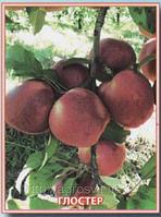 Яблоки оптом Глостер