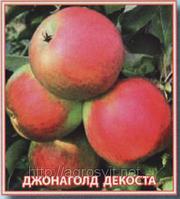 Яблоки Джонаголд Декоста