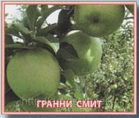 Яблоки купить Грани Смит