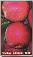 Яблоки Чемпион Рено