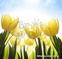 """Фотообои: """"Жёлтые тюльпаны"""""""