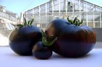 Семена томата Черный принц 0,2 г