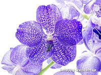 """Фотообои: """"Фиолетовые цветы"""""""