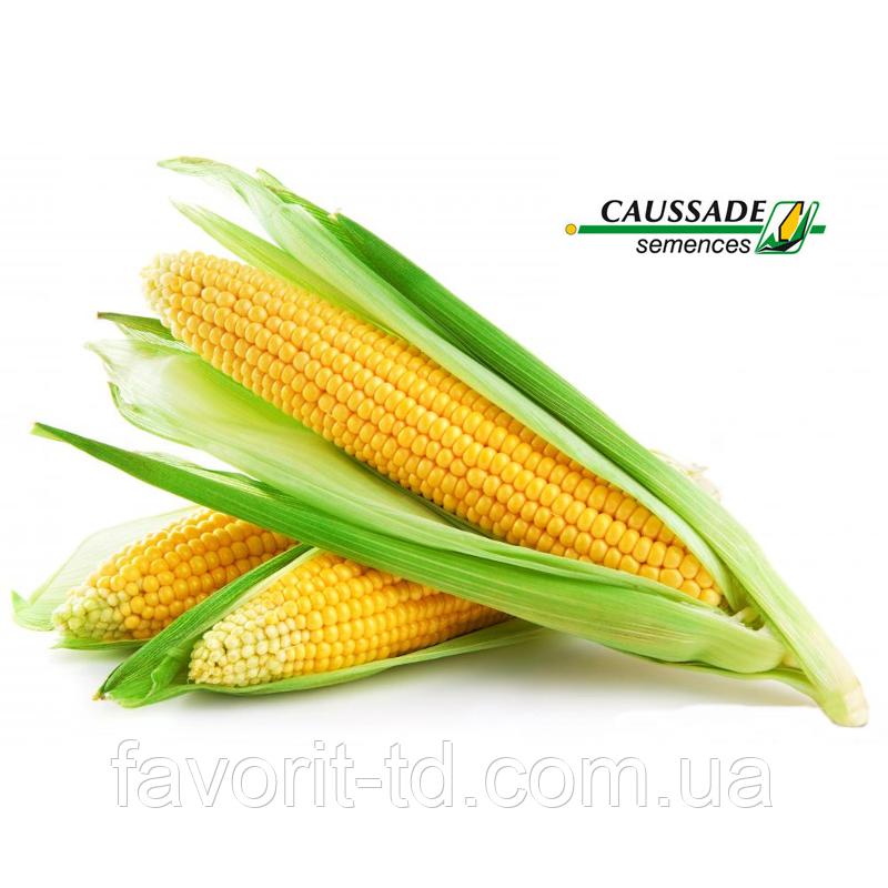 Семена кукурузы «Исбери» ФАО 190